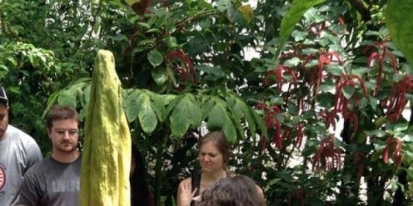 Ini Dia 5 Perbedaan Bunga Bangkai dan Bunga Raflesia!  Kamu Harus Tahu!