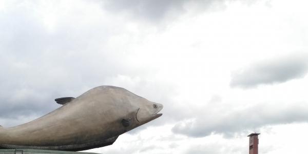 Tentang Belida, Ikan Legendaris di Balik Ikon Baru Kota Palembang