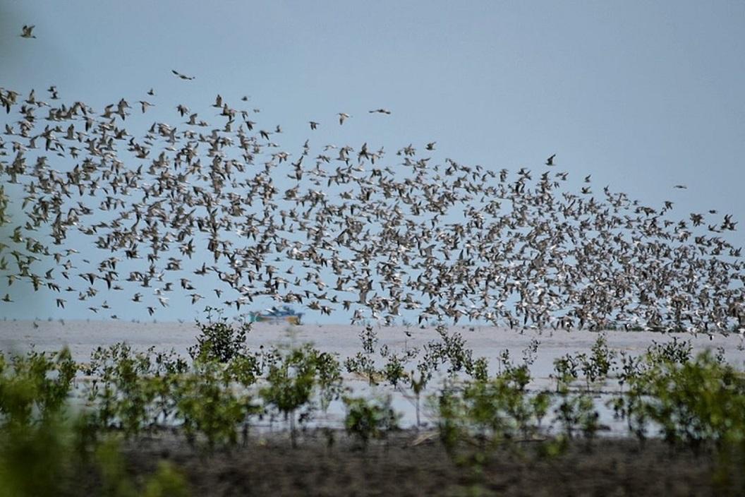 Pemkab Banyuasin akan Bangun Vila Laut di Taman Nasional Sembilang