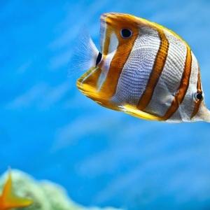 Kekinian! Ada Kampung Ikan Hias Baru di Palembang